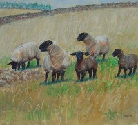Charles Simpson Suffolks, Lambs and Turnips