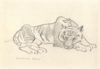 Stanislaus Brien Tiger 1