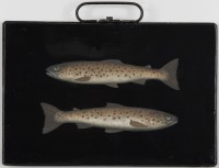 Donald Provan Highland Brown Trout
