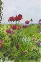 Howard Morgan Poppies