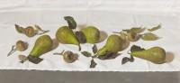 Sian Hopkinson Pears and Medlars