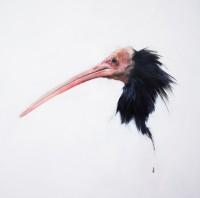 Justin Coburn Ibis Head
