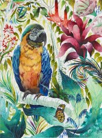 Kate Morgan Blue and Gold Macaw