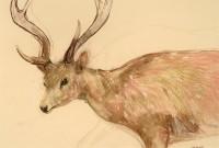 Lara Scouller Deer