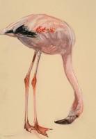 Lara Scouller Flamingo