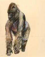 Lara Scouller Gorilla