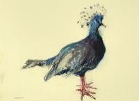 Lara Scouller Victoria Crowned Pigeon