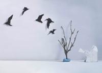 Donald Macdonald, Birdy, Birdy