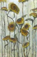 Michael Hyam Sunflowers