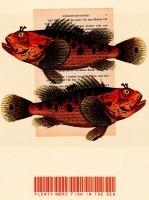 Orson Kartt Plenty More Fish in the Sea