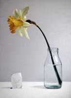 Donald Macdonald Daffodil