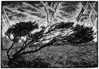 Neil Bousfield Gower Peninsula: Windy Tree