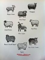 Jazmin Velasco Sheep of Britain